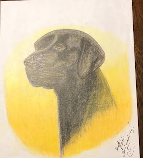 Labrador Retriever in colour pencil