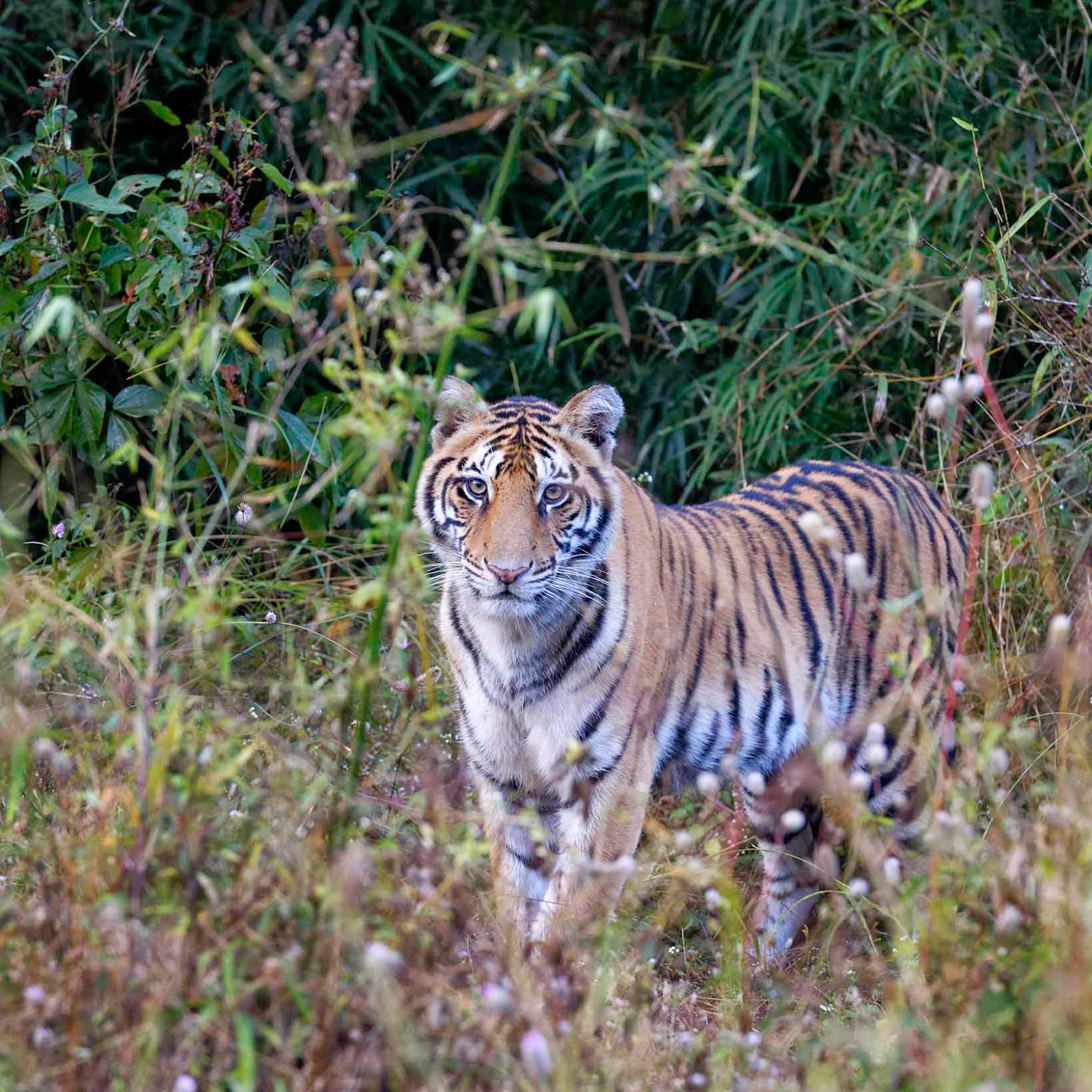 wildlife conservation in india हाथी संरक्षण परियोजना, project elephant    elephant reserves    wildlife conservation in india    environment and ecology वन्य जीव संरक्षण परियोजनाए    wildl.