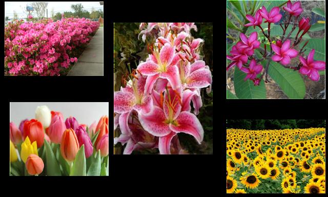 azaléia, tulipa, girassol, lírio. jasmim, flores, primavera, flor