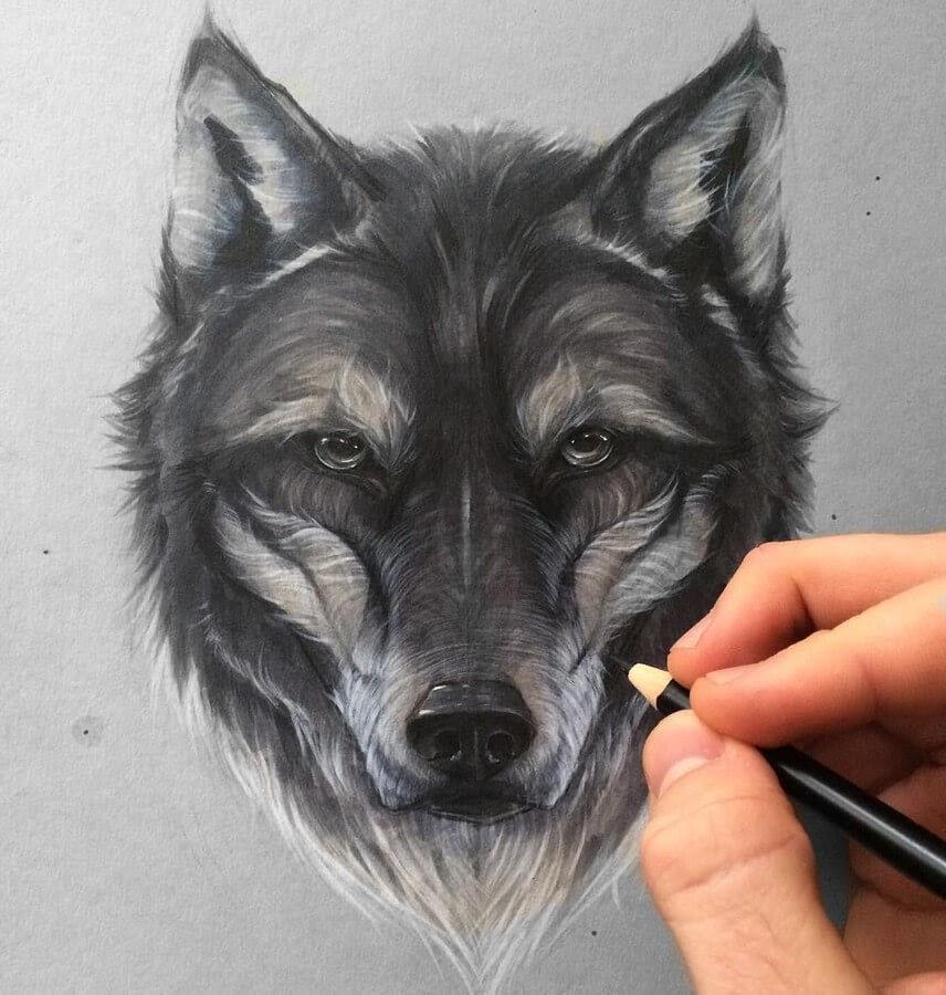 04-Wolf-SW-Whiteside-www-designstack-co