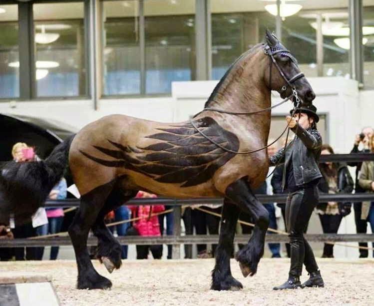 Картинки по запросу лошадь падает