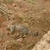 Matança de animais gera preocupação no Jardim Heliana II