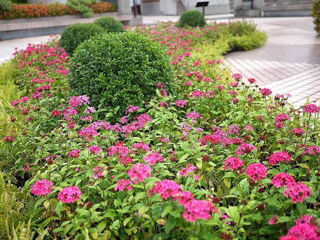 P1300785 - 熱血採訪│臺中花都藝術季清水一日遊,2018世界花卉博覽會暖身活動