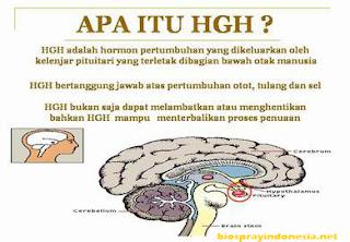 Hormon Pertumbuhan ( HGH )