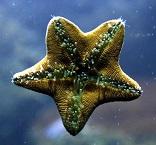 स्टारफिश की जानकारी इन हिंदी। Starfish Essay in Hindi
