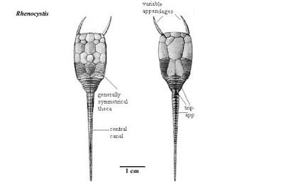 devonian trilobites