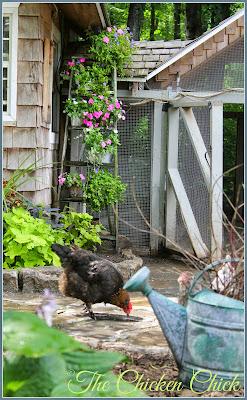 Summer Chickens