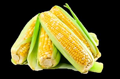 AJHT juga menggunakan Ekstrak jagung di dalam kandungannya