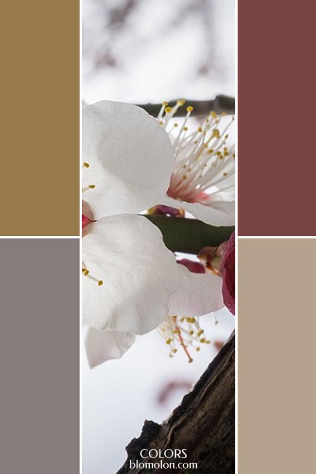 combinacion_variedad_de_color_3