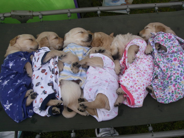 Cute Wait Not The Puppies In Onesies