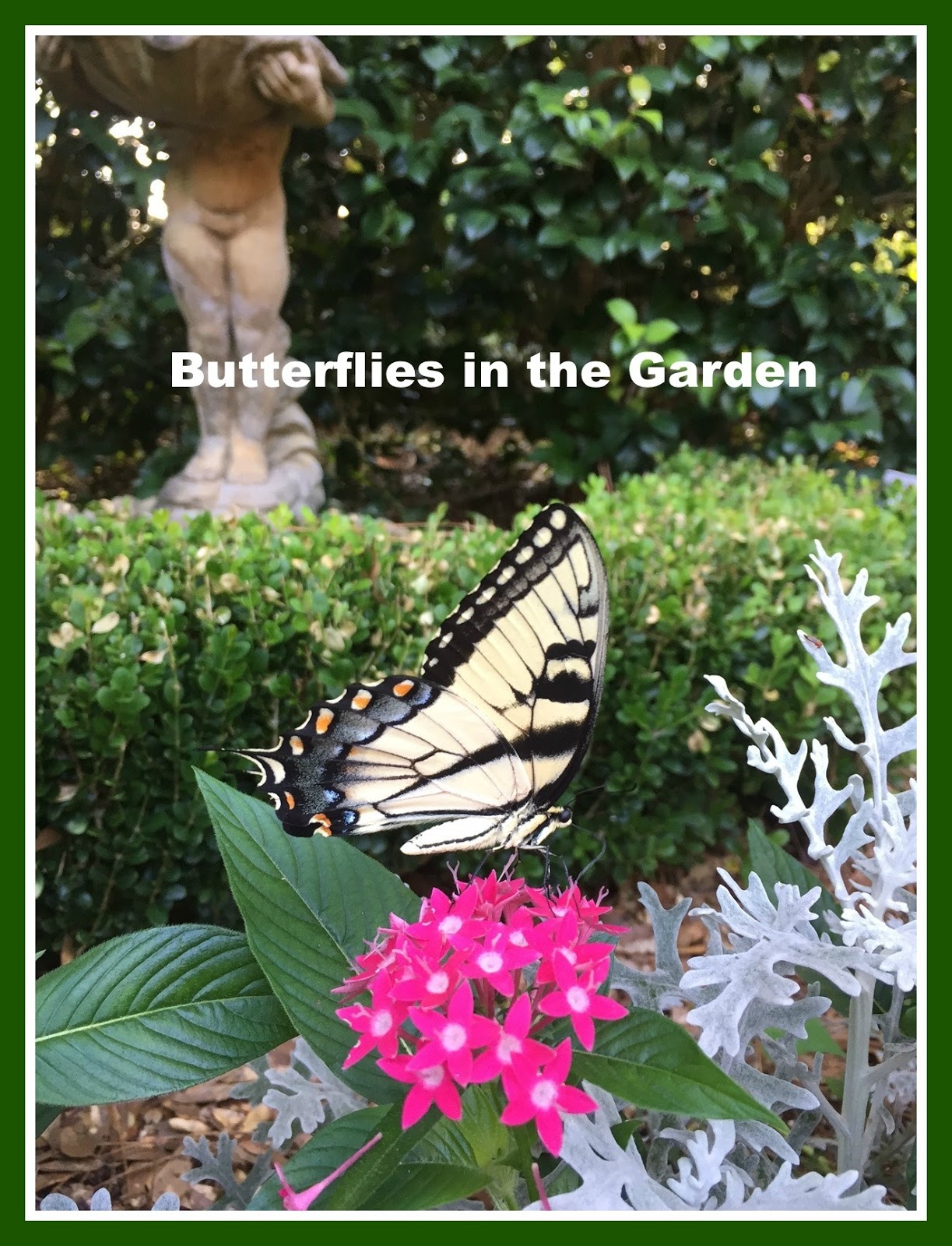 Join Me Today, As I Share Some Butterflies From My Garden. This Week I  Learned Some Fascinating Things About ...