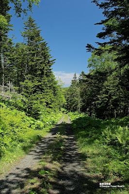 温根沼林道 ≪Onnetou Forest Road≫