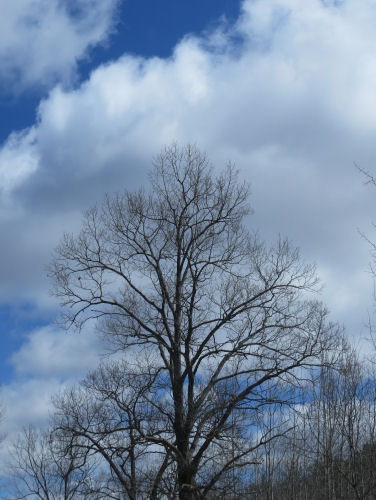 bare tree against blue sky