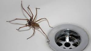 How to Get rid Of Spiders from Home With Natural Home Remedies