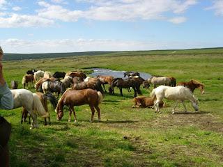 Islanti, ratsastusmatka, riitta reissaa