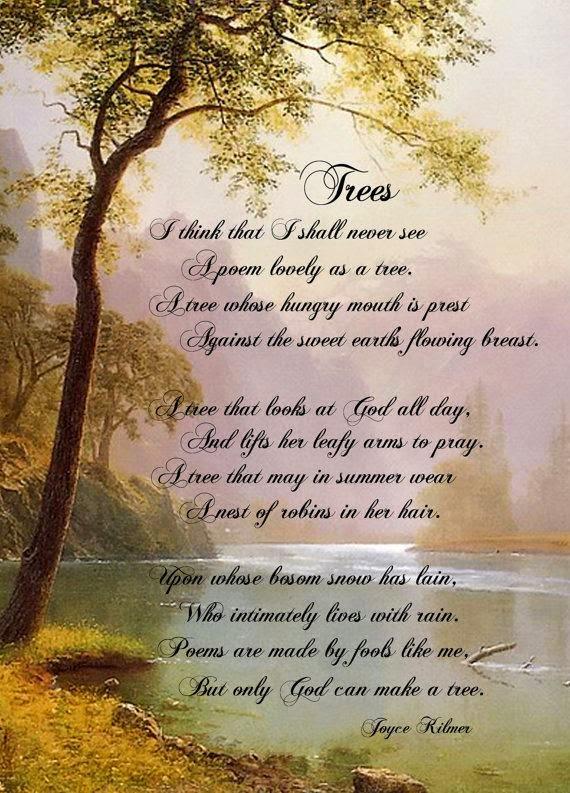 Molto POESIE SULL'ALBERO: Poesie sugli alberi OL79