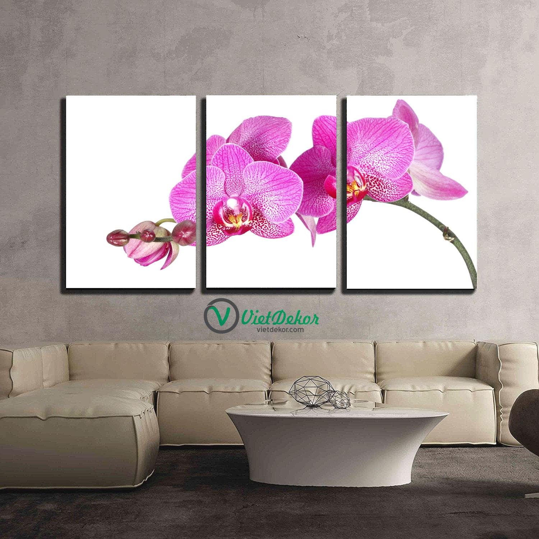 Tranh bộ 3 hoa phong lan đẹp