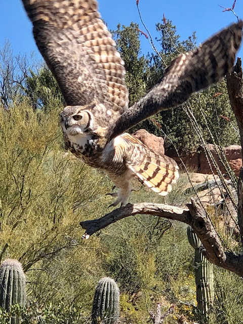 Make the Arizona-Sonora Desert Museum a Destination When You Visit Saguaro National Park and Tucson, Arizona