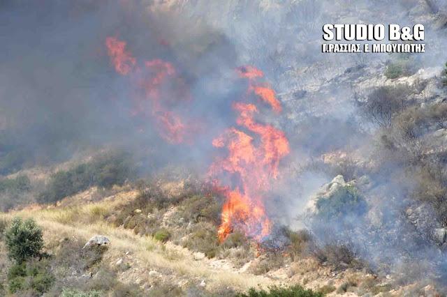 Υψηλός κίνδυνος πυρκαγιάς στην Αργολίδα την Τρίτη 28 Ιουλίου