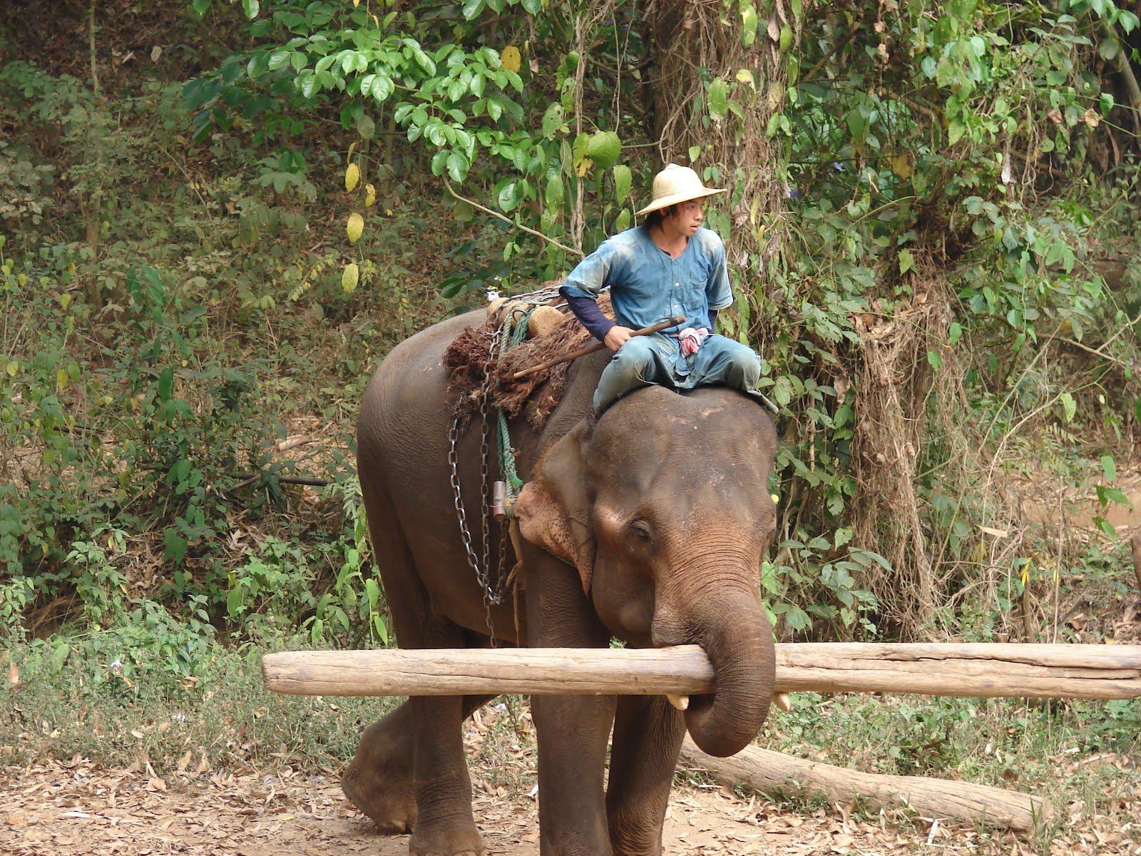 Elephantstory
