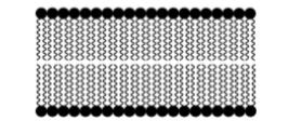 bioquimica agua pdf  bioquimica enfermagem pdf  bioquimica humana pdf  macromoleculas bioquimica pdf  apostila de bioquimica para enfermagem pdf  definição de bioquimica pdf  bioquimica animal pdf  bioquimica de alimentos pdf