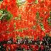 3 Cara Menanam Bunga Flame Of Irian Agar Cepat Berbunga