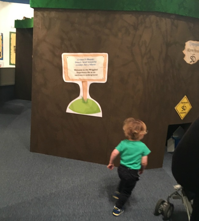 National-Museum-Cardiff-a-toddler-runs-towards-wriggly-worm-exhibit