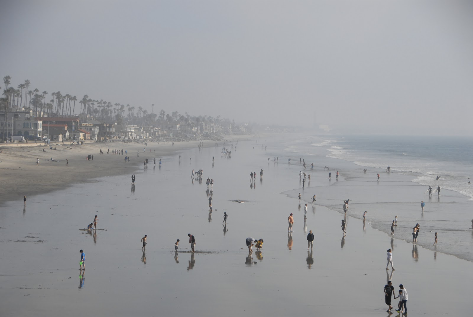 foggy day at the beach: LadyD Books