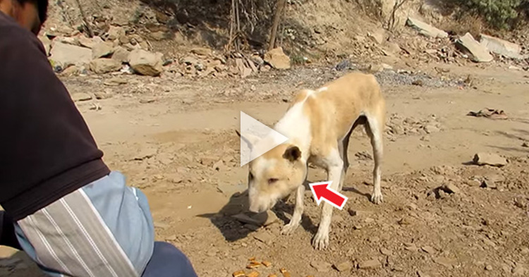 Volunteers rescued a poor street dog suffering from life-threatening infection on the face