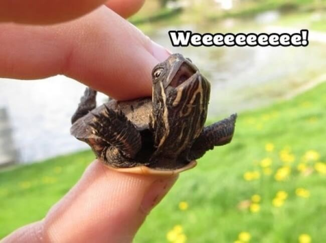 25 Thrilling Images That Made Our Day - This turtle knows how to celebrate life
