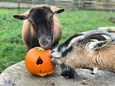 Penny & Jim enjoying their pumpkin