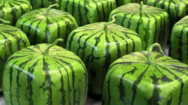 12 Most Expensive Fruits in the World, Square Watermelon