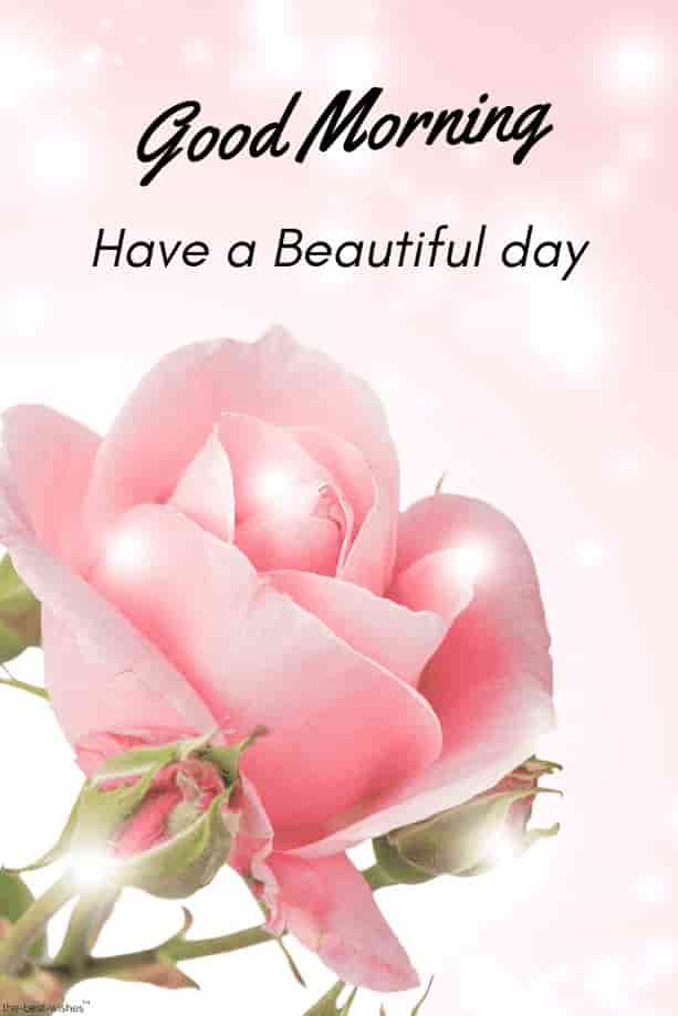 hd picture of good morning with shining pink rose