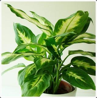 Şifalı Bitkiler 17