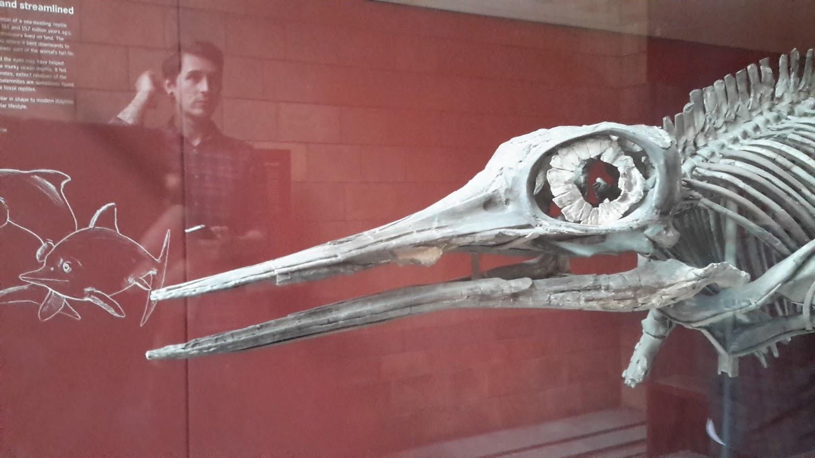 Weird Fish Skull 2