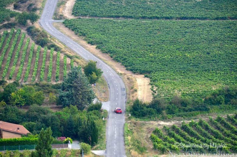 北スペイン・リオハの葡萄畑を走る赤い車