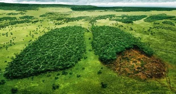 salvar planeta calentamiento global 620x330 - Calentamiento global. Encuentran la solución