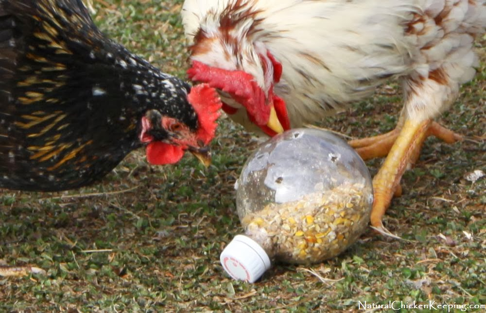 Toys For Chicks : Natural chicken keeping cheep n easy diy