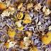 Lavender & Chamomile Bath Tea
