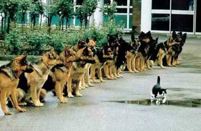 cani e gatti amici