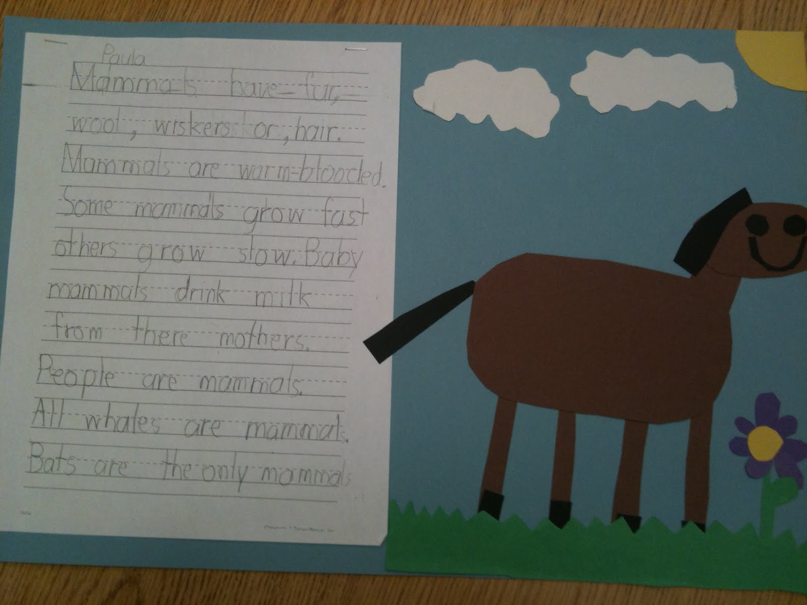 First Grade Best Animal Groups And Animal Characteristics