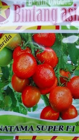 Benih, Natama Super, BCA,tomat, tahan virus,kuning, keriting, unggul, dataran rendah, tinggi, petani, Harga murah
