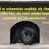 Pomóż psiakom: Pomaganie przez klikanie