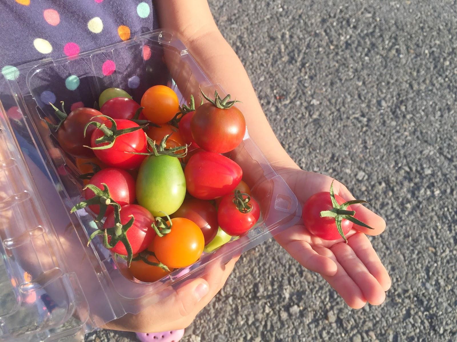 ..: 彩色小蕃茄