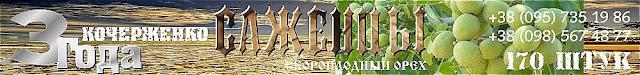 Купить трехлетние саженцы ореха Кочерженко, 0957351986, 0985674877, Купить Walnuts Broker