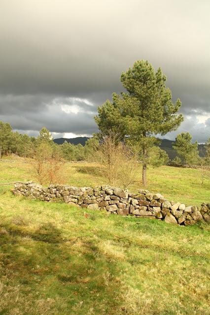 Parque arqueológico Campo Lameiro