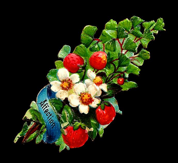 http://4.bp.blogspot.com/-_JBjTzHWpkU/UlxZoN4KEHI/AAAAAAAARZs/vSMbpCalMj4/s1600/affection_strawberriespng.png
