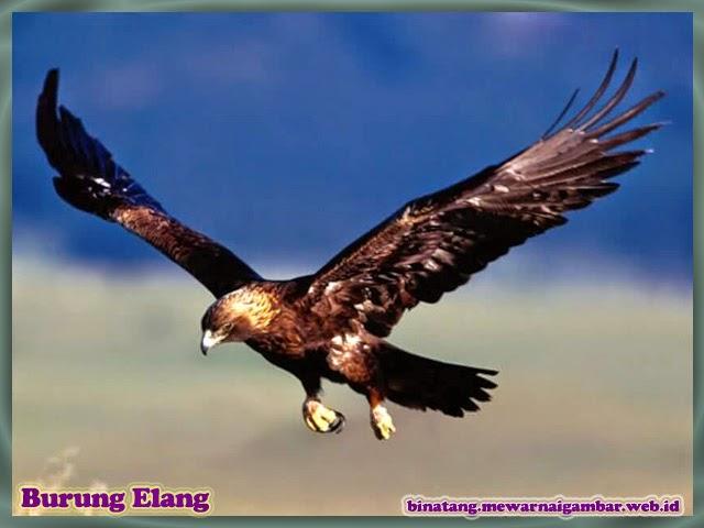 gambar burung elang binatang dari huruf e