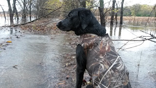 "alt=""North Texas Retriever Trainers dog in water"""