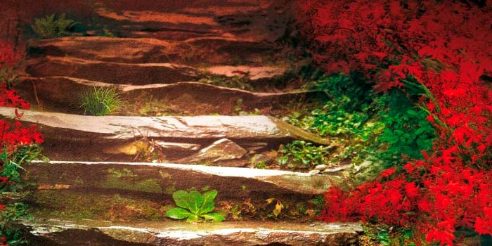 La estación de las flores en llamas de Sarah Lark